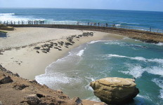 Seals on the beach at the Children's Pool in La Jolla. Source: Wikimedia Commons.