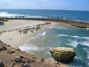 Seals on the beach at the Children's Pool in La Jolla. Soure: Wikimedia Commons.