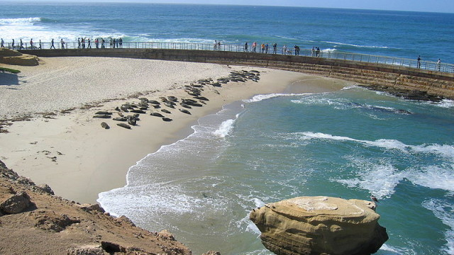 Seals on the beach at the Children's Pool in La Jolla. Photo via Wikimedia Commons