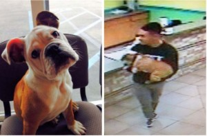 Photo of missing bulldog puppy and person suspected of taking it. Photo released by San Diego Crime Stoppers