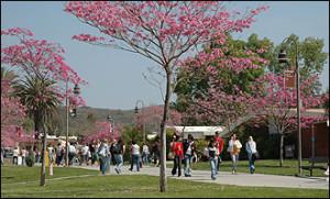 Photo credit: Palomar.edu