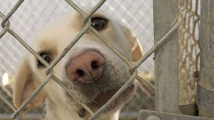 A dog in an animal shelter. Photo via Wikimedia Commons
