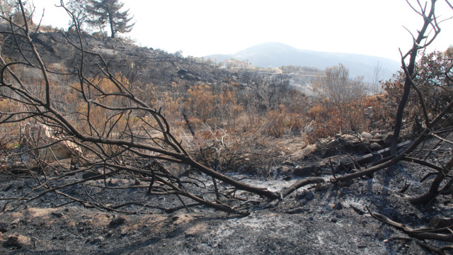 Burned landscape