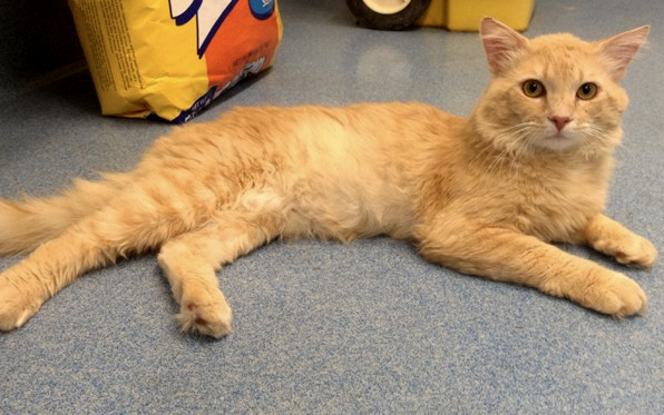 Cats For Adoption In San Diego County