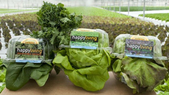 Go Green Agriculture's Happy Living lettuce brands. Photo courtesy Go Green Agriculture