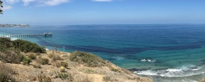 A giant anchovy school forms a dark band off Scripps on July 8. Photo by Douglas Alden of Scripps Institution