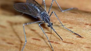 536px-Mosquito_2007-2