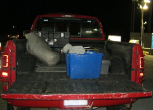 Border patrol found a small plastic bag with methamphetamine residue and a 12-gauge shotgun concealed within storage boxes in the bed of the truck driven by a felon. Photo courtesy of US Border Patrol