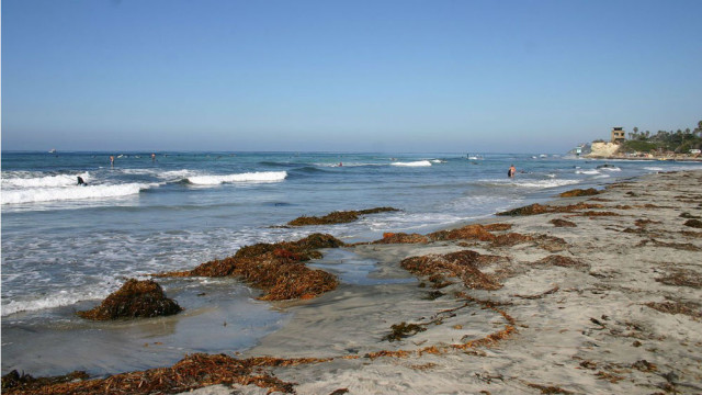 Cardiff State Beach in Encinitas