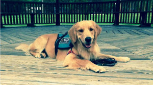 Drake, the new autism service dog in Oceanside.