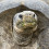 S.D. Zoo's Ancient Tortoise Sent Where for Retirement?