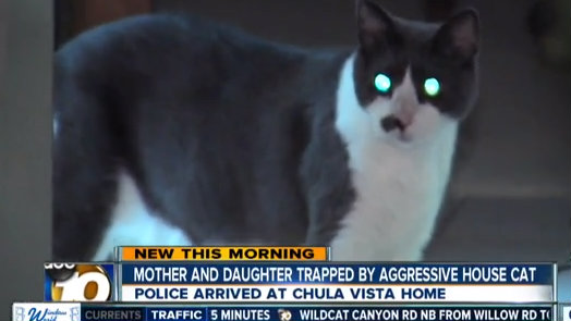 chula vista middle eastern single women Chula vista police are looking for  chula vista police want help finding suspects in  police described the stabbing suspect as latino or middle eastern, .