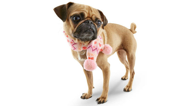 A dog modeling Petco's Smoochie Pooch Pink Heart Fair Isle scarf. Courtesy Petco