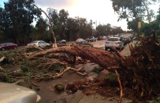 A downed tree on Friars Road in Mission Valley. Photo courtesy of Dang Tran