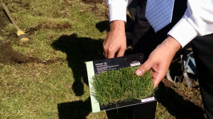 Roberts compares artificial turn sample to his lawn.