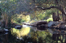 The Escondido Creek Conservancy (TECC) is a non-profit, public benefit, corporation, incorporated in 1991, dedicated to the preservation, restoration and protection of the natural open space within the Escondido Creek watershed. Photo via Escondidocreek.org