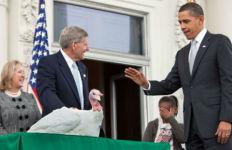 President Obama pardons a turkey in 2009. White House photo via Wikimedia Commons