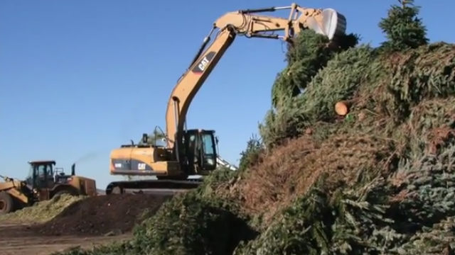 Christmas tree recycling in San Diego. Image from city video