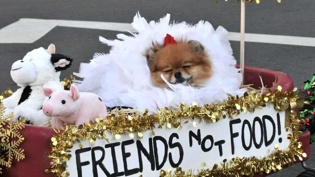 santa paws romp in the gaslamp watch the pet parade