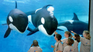 SeaWorld campers study killer whales during an education session.  Courtesy SeaWorld Entertainment
