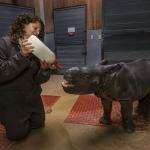 baby one-horned rhino