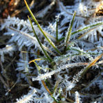 Frost on a lawn