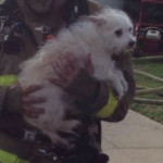 Point Loma fire rescued dog