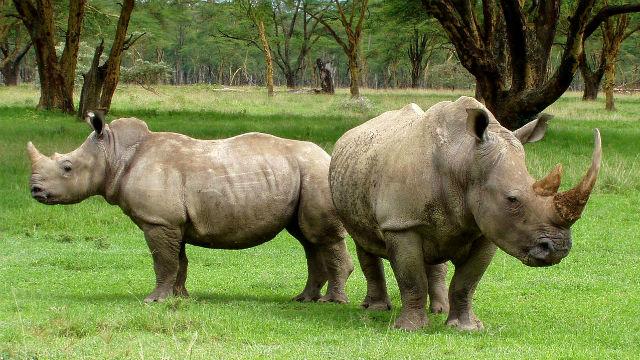 Atkins: End Sale of Elephant, Rhino Ivory in California