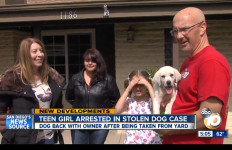 A stolen labrador puppy reunited with its his family. Image from a 10News broadcast.