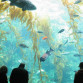 The 70,000-gallon kelp tank at the Birch Aquarium. Photo via Wikimedia Commons