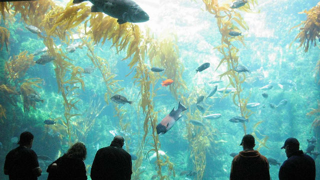 Image result for birch aquarium