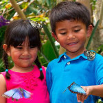 butterfly jungle 1