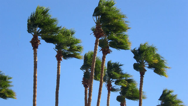 Gusts of fierce wind sway palm trees. Photo via Pixabay.