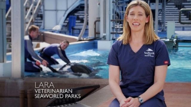 SeaWorld veterinarian  Lara Croft pictured in SeaWorld's new TV ad. Image from PR NewsWire