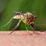 West Nile Found in San Diego County | Times of San Diego