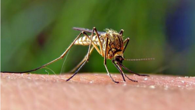 Mosquitoes can carry West Nile virus. Image via San Diego County Twitter