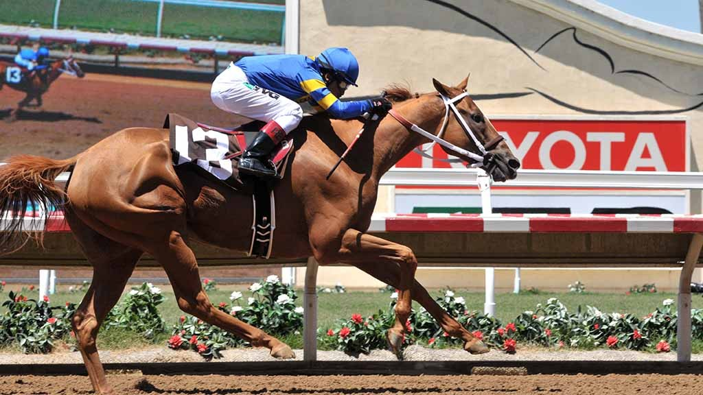 Jockey Rafael Bejarano leads Olympic Blue to victory in the first rae of the season. Chris Stone photo