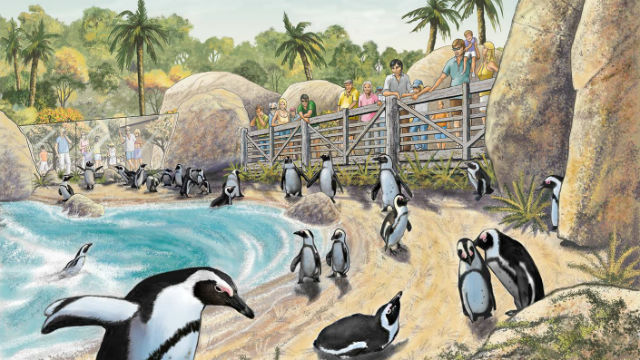 San diego zoo begins largest renovation in its history times of san