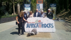 """A hedgehog """"breaks ground"""" as Ernest Rady, center, and Conrad Pregys, second from left, look on. Photo by Chris Jennewein"""