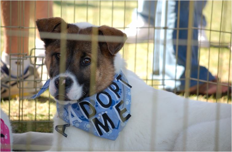 san diego humane society dog walk