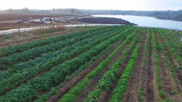 Carlsbad strawberry farm. Photo courtesy of Caruso Affiliated
