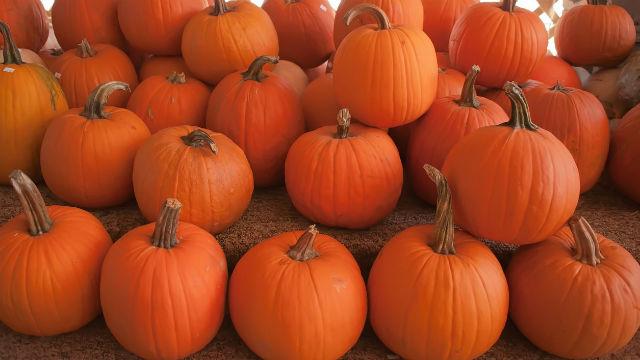 Halloween pumpkins ready for caring. Photo via Pixabay