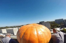 Pumpkin ready to drop from Urey Hall in 2015. Courtesy UC San Diego