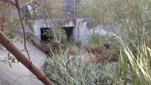 An obstructed storm drain at Via De La Bandola in San Ysidro. Courtesy David Alvarez
