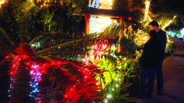Annual Botanic Garden of Lights Starts Saturday in Encinitas