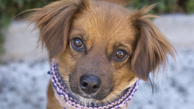 Photo courtesy of the San Diego Humane Society