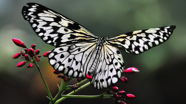 The Butterfly Jungle at the San Diego Zoo Safari Park. Photo by Bill Gracey via Flickr