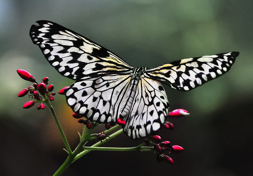 Butterfly Jungle To Return To San Diego Zoo Safari Park