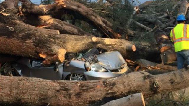 Tree crushes car
