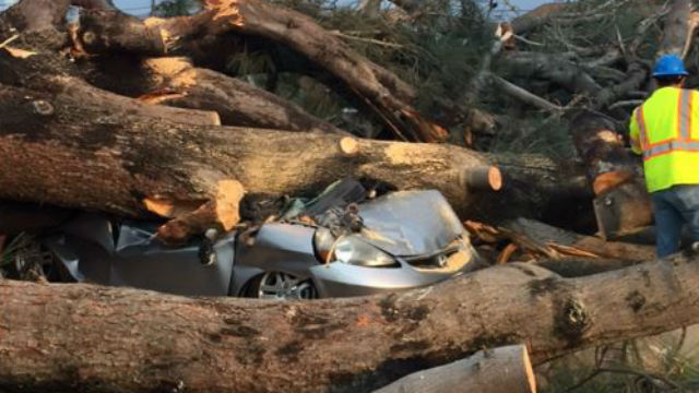 Photo by San Diego Fire-Rescue shows car crushed by oak tree in Pacific Beach.